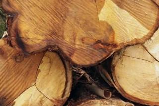 A certificación forestal medra en Galicia un 80% nos últimos 5 anos