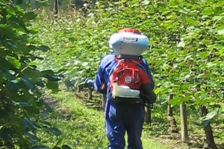 Boas prácticas no uso de produtos fitosanitarios