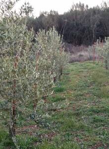 oliveiras_aceites_abril_01_standar