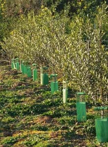 oliveiras_aceites_abril_02_standar