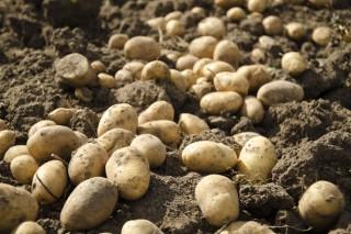 Produtos fitosanitarios sen carné para as enfermidades da pataca