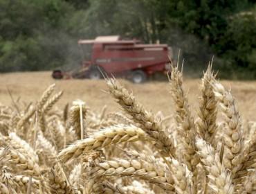 A FAO prevé unha boa colleita mundial de cereais e prezos baixos