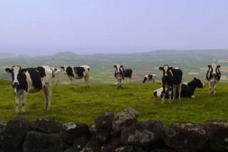 El 18 % de las ganaderías sobrepasó la cuota a dos meses del fin de la campaña