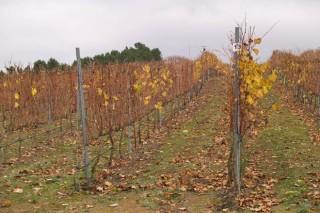 Abierto el plazo de inscripción para los cursos de viticultura y enología, y fruticultura de la Fundación Juana de Vega
