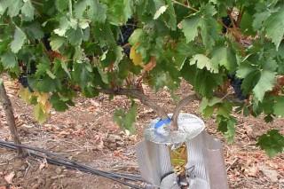 """""""O cambio climático pode ser beneficioso para a viticultura galega"""""""