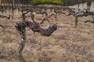 Xornada sobre a normativa para novas plantacións de viñedo