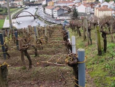 Curso de viticultura e enoloxía