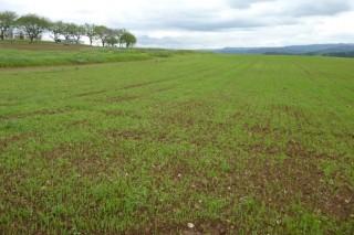 Os obstáculos á mobilidade das terras agrarias en Galicia