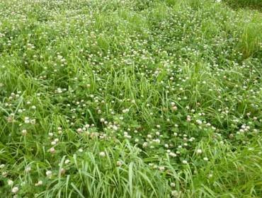 Fertiprado dispón de 30 especies para lograr as praderías máis rendibles