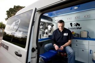 Unha empresa exporta a xenética das mellores vacas galegas