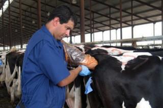Curso de inseminación artificial de vacún en Monforte de Lemos