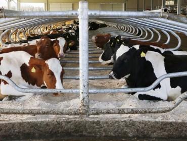 ERIMSA lanza as areas QBED, recomendadas como camas para vacas