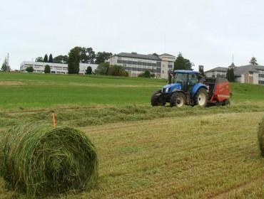 Mellora a calidade do silo de millo en Galicia pero empeora a do silo de herba