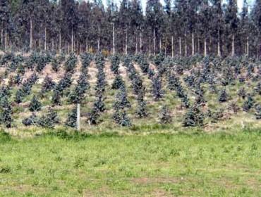 Obxectivo de recuperación de terras para o leite, 35.000 hectáreas