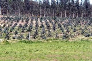 O 14% das granxas que abandonan a actividade quere forestar as terras