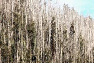 Ence anuncia que reforestará 5.400 hectáreas incendiadas o abandonadas
