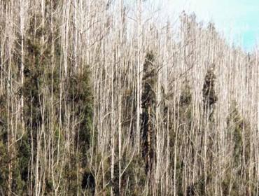 A Xunta proxecta incorporar ó Banco de Terras montes veciñais en abandono