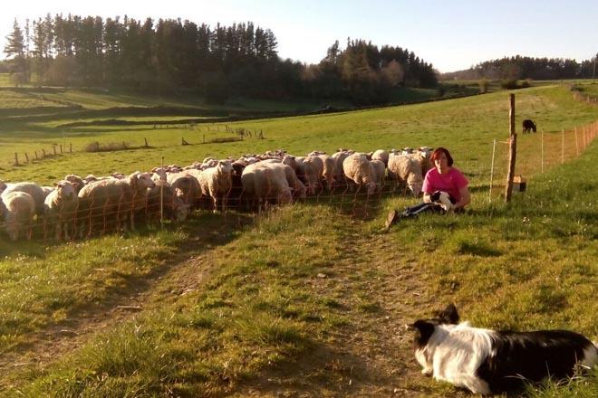 """""""Las ovejas juegan un papel ambiental que no está reconocido"""""""