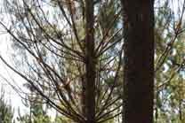 A Xunta, sorprendida polas críticas da patronal da madeira