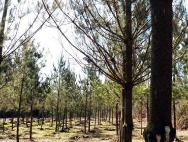 Ábrese o prazo para solicitar axudas para a plantación de coníferas e frondosas caducifolias