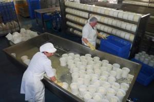 Queinaga elabora queixo de Tetilla e de Arzúa-Ulloa.