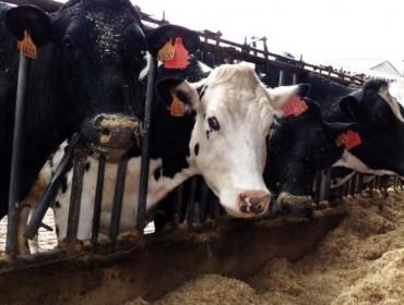 Dinamarca y Bélgica, escenarios de nuevos acuerdos de precios de la leche