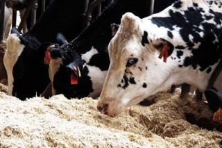 """""""Somos líderes en leite, pero secundarios na súa industrialización"""""""