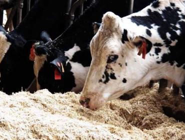 Santiago acogerá en noviembre el IV Congreso de Alimentación Animal