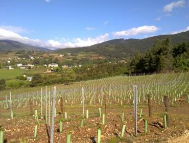 As autorizacións para plantar viñedo: un sistema que non contenta a ninguén