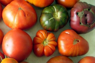 O CIAM publica unha guía das variedades autóctonas de tomates galegos