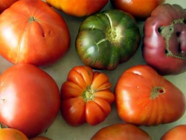 ElCIAMedita una guía de las variedades autóctonas de tomate