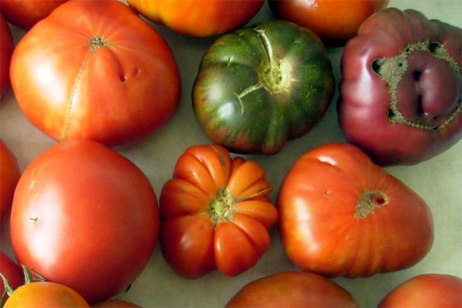 Vantaxes e inconvenientes das variedades hortícolas locais