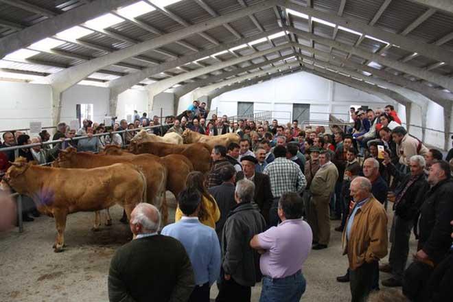 O baixo prezo da carne preocupa ós criadores de raza rubia galega