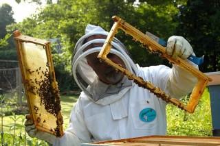 Cursos de apicultura da Asociación Apícola Ourensá