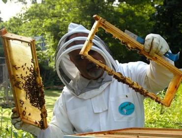 Xornada sobre as axudas para a incorporación á apicultura
