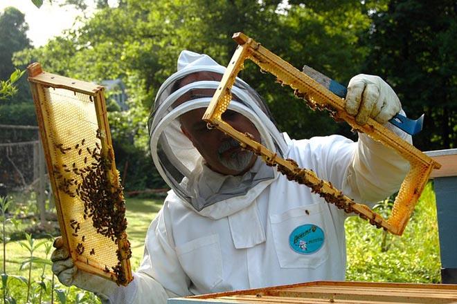 Diversificación e novas tecnoloxías, claves para mellorar a rendibilidade dos apicultores