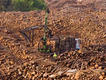 A madeira deixou 278 millóns de euros nos propietarios forestais galegos no 2018