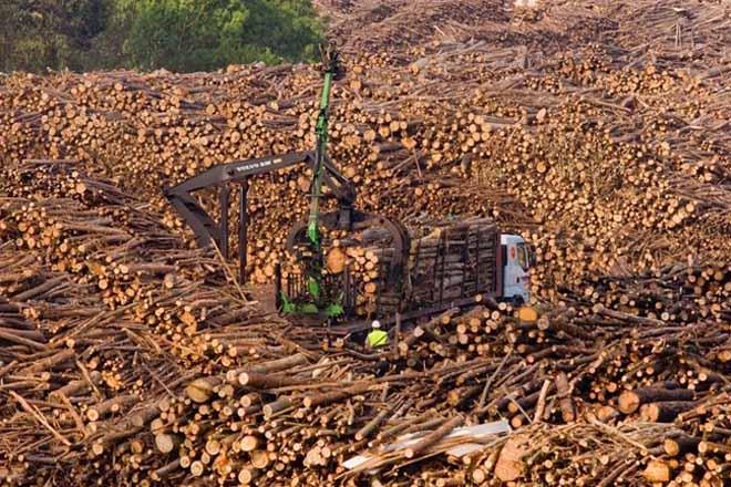 Que cambia no sector forestal e eólico coa Lei de Iniciativas Empresariais?