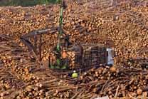 La cadena forestal gallega consigue récords de talas y exportaciones
