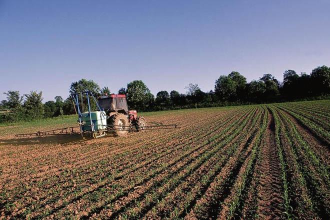 Aplicación de herbicidas no cultivo do millo