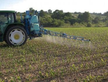Solucións herbicidas e insecticidas para o cultivo do millo
