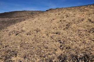 Galicia e Portugal lideran un proxecto para a recuperación de solo forestal queimado