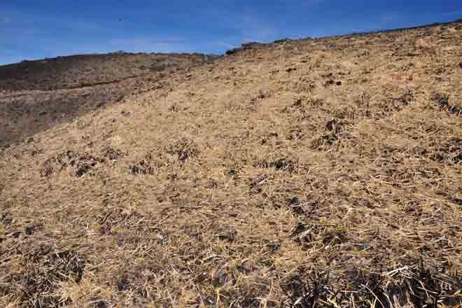 Xornada de restauración de espazos degradados por lumes forestais