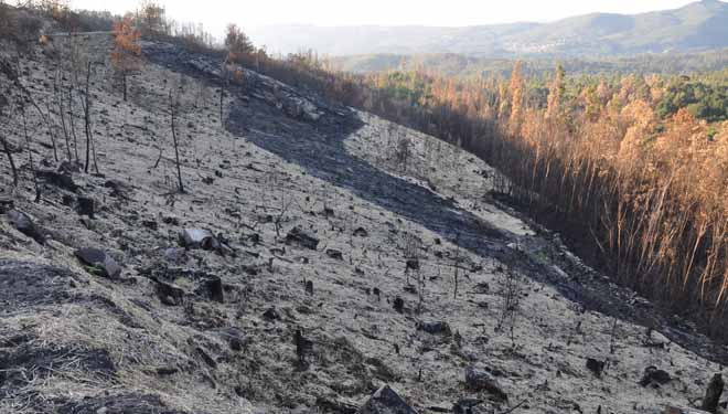Aplicarase 'helimulching' con palla en 166 hectáreas dos incendios de Ourense