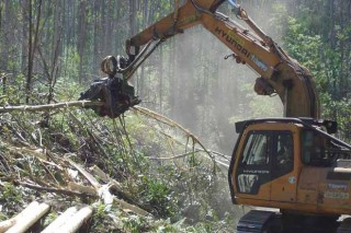 Ence creará en Galicia tres plantas de producción de biomasa
