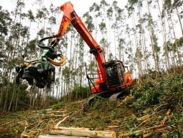 Reactivación en el mercado del eucalipto y lentitud en el pino tras los incendios