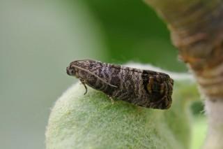 Avisos por enfermidades en froiteiras