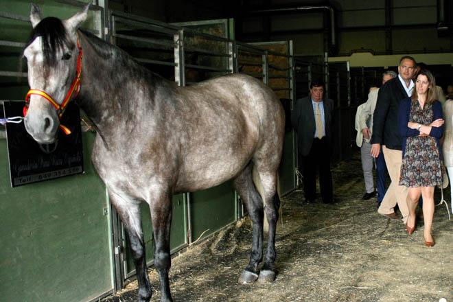Lugo convértese este fin de semana na capital do mundo do cabalo co VIII Salón Equigal