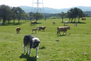 Piden que la ley de animales domésticos diferencia perros de compañía de los de trabajo en el rural