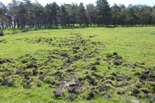 Piden á Xunta que autorice a caza con axexo do xabarín, como se fai en Cataluña